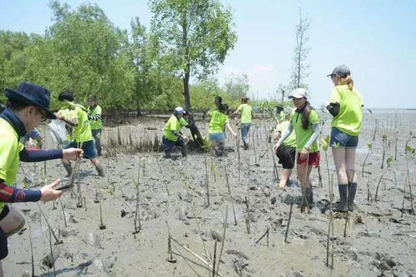 Napattiga集团董事长韩智康先生亲自带领全体员工参与植树活动